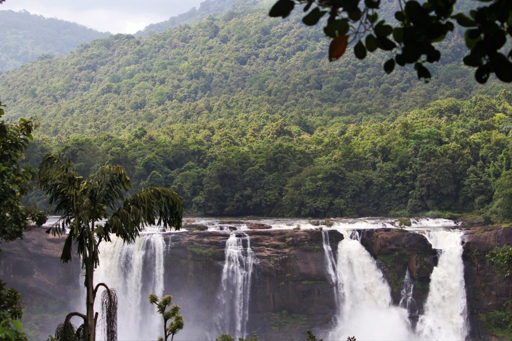 Tropical Rainforest Caribbien Islands